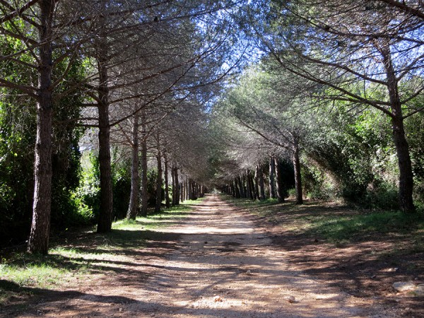 cannes-ile-lerins-foret-pin