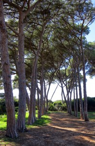 cannes-ste-marguerite22-SeeByC