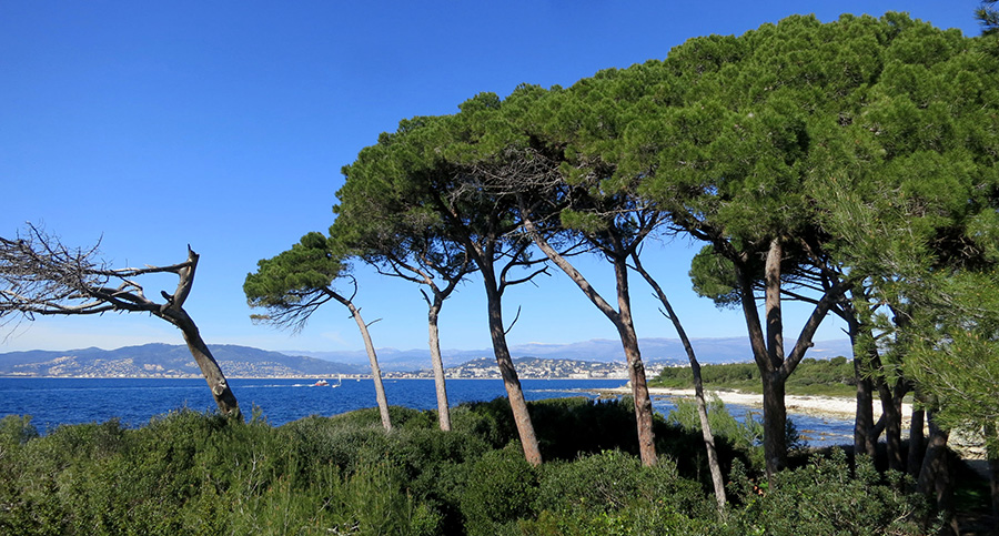 cannes-ste-marguerite23-SeeByC