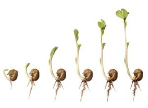 germination-01