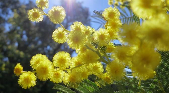 Escale à Tanneron sur la route du mimosa